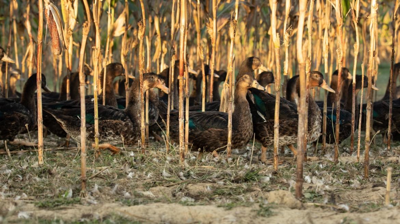 Soutenez deux achats collectifs de terres agricoles à Lohitzun!